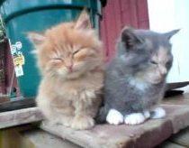 Pavargę kačiukai - snūduriuoja