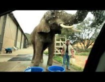 Elephant Car Wash at Wildlife Safari, Oregon