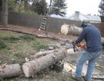 Cutting the magic tree - Guy cuts up tree, then this happens