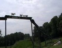 The Goat Bridge