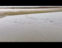 Amazing Video || 50 sharks spotted swimming in West Sussex Coast || PSRB Pagnam Harbour ||