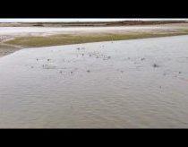 Daugybė ryklių prieplaukoje