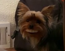 Toothy Dog Thomas