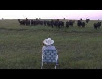 Serenading the cattle with trombone