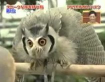 Transformer Evil Owl