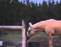 Hübsches Pony