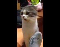 Katė apsiuosto kojinų