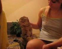 Mielas katinas,,,,,,E,,e,nu paglostyk nu?