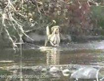 Šuo pagauna didžiulę žuvį