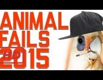 Funniest Animal Fails Compilation || FailArmy