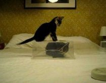 Kitten attempts to defeat cat's plastic fortress
