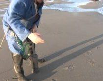 Didžiulės dvigeldės kriauklės ir jų medžioklė
