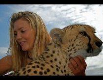 A brave woman teases wild cheetahs(Marlice Van Der Merwe)