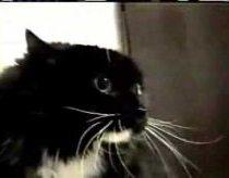 Oh my dog (oh long jonson) - kalbantis katinas