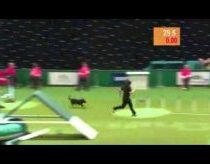 Puikų Šuns Pasirodymą Sugadina Netikėtas Siurprizas