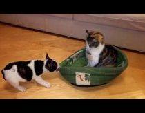 Šunelis bando iš katino atsikovoti savo prarastą guolį
