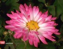 Gėlių Gyvenimas