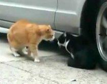 Katinas neištikimas savo daugei
