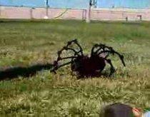 Didžiulis (gal net didziausias) voras (šuo)