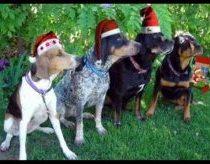 Šunys suloja Jingle Bells