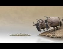 Couple wildebeest contemplate crossing a river.