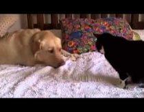 Šunys tiesiog nori susidraugauti su katėmis