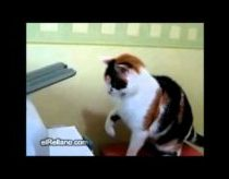 Cat solves printer-problem