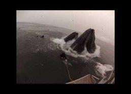 Banginiai vos nepraryja narų