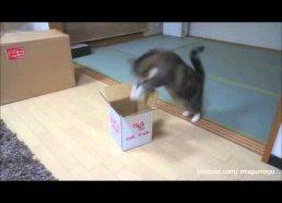 Katės bando sutilpti
