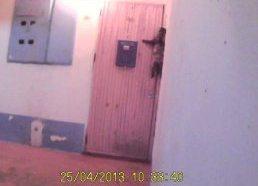 Katinas sugrįžęs namo, pats paskambina durų skambčiu