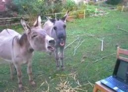 ★ Donkey watches donkey on youtube