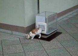 Liftas katinui