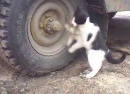 Katinas ilgai ieško gerai pasislėpusios pelės