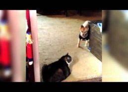 Katės nepraleidžia šunų