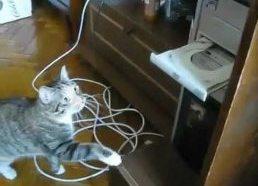 Cat fights vs DVD reader