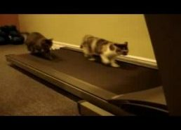 Two Cats On Treadmill