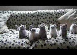 Kačiukai šoka ir linguoja pagal muziką