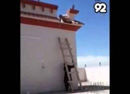 Pokštas su nepasiekiamomis kopėčiomis