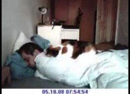 Simons Cat (Simono katinas) tikroji versija