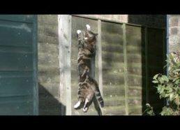 Kaip katinai įveikia gravitaciją - 100 kartų sulėtintas vaizdas