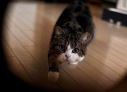 Iš katino, vardu Maru gyvenimo...