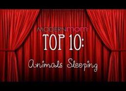 Sleepy Animals - ModernMom Top 10