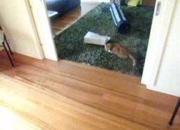 Katinų lazerinis boulingas