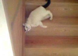 Tai vienas iš būdų kaip katei nusileisti laiptais