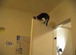 Mission Impossible cats