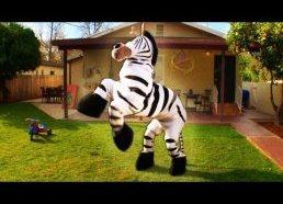 Dope Zebra