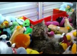 Claw Machine Cat