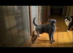 Katinas prašosi įleidžiamas - su galinėm kojom!