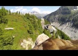 Flying eagle point of view