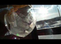 Muilo burbulas sušąla akimirksniu